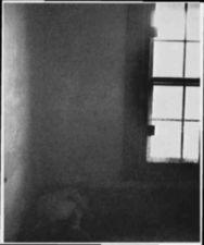 A large screened window from inside a darak room.