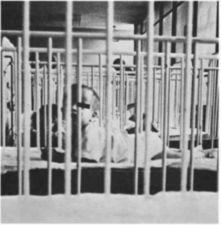A child seen through the bars of several cribs.