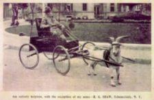 A man rides in a goat-drawn cart